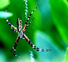 Arachnophobia by Sharon Ulrich