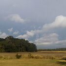 Stormfront clouds over Live Oaks and marsh by Nadia Korths