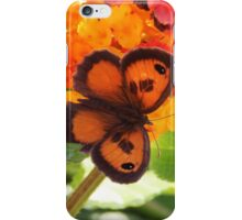 Southern Gatekeeper Butterfly iPhone Case/Skin