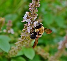 The nature of the bee by Scott Mitchell