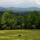 Horses In A Field by Gary L   Suddath