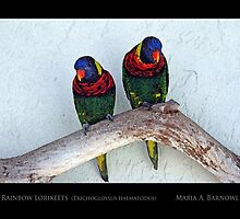 Swainson's Rainbow Lorikeets - Cool Stuff by Maria A. Barnowl