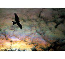 Black Kite and Iridescent Cloud Photographic Print