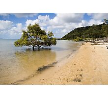 Mangrove in the sea Photographic Print