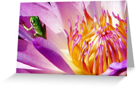 Frog on a Water Lilly by David Cortez