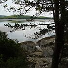 Borth - y- Gest a view across the estuary by Frances Knight