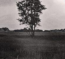 Alone by stacygeske