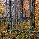 Cabin in the Woods by Carla Jensen