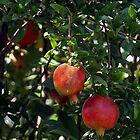 Pomegranates by Maria A. Barnowl