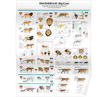 Pantherinae (big cats) chart for artists Poster
