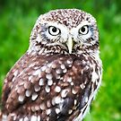 Pygmy Owl by Ludwig Wagner