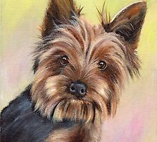 Yorkshire Terrier  by JanetMGraham