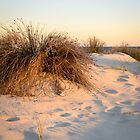 In the dunes by Jennie  Stock