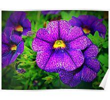 Purple lovers' flower Poster