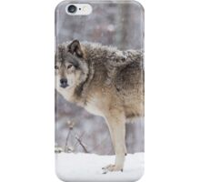 A lone Timber Wolf in the snow iPhone Case/Skin
