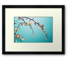 Blossoms in the Sun Framed Print