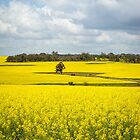 Canola and clouds by Jennie  Stock