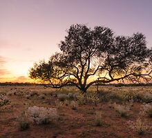 Outback sunrise by Jennie  Stock