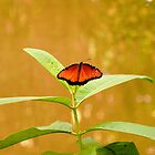 Butterfly at the zoo by Gleb Zverinskiy