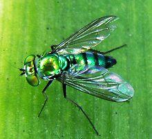 Super Fly by David Cortez