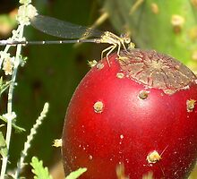 Dragonfly on fruit by mwfoster