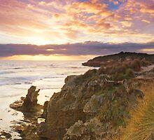 Scarred Coast by Sam Sneddon
