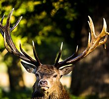 King of the woods by Martin Griffett