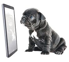 Facetime Frenchie by Andrew Bret Wallis