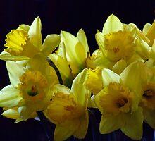 daffodilDay#3 by Beccaboo