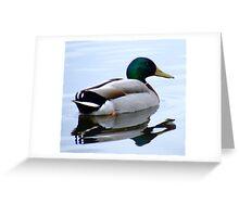 Morning Swim Greeting Card