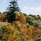 Autumn in Nikko by Joumana Medlej