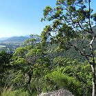 Half way up, Karanda, Qld, Australia by Sandra  Sengstock-Miller