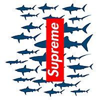 Supreme sharks Photographic Print