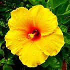 Hy Flower by David Cortez