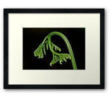 New Born - Fern Frond Framed Print