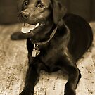Black Lab Sepia by Moth