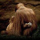 Orangutans by Natalie Manuel