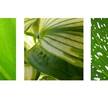 Green Triptych by Tiffany Dryburgh