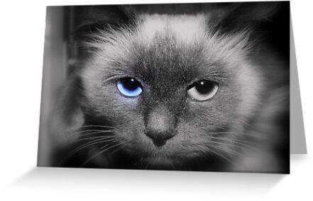 Blu Eye :) by Sorin  Reck