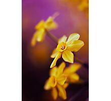 Like A Dream Photographic Print