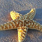 starfish by Geri Bragg