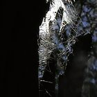 spiderweb hunt by webgrrl