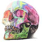 Rainbow skull by stephdrawsstuff