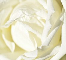 A rose by any other name by Rdiepenheimfoto