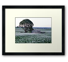 Shed with Lupins Framed Print