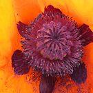Poppy Heart by cherie hanson