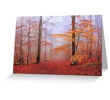 Beech Forest. November. Greeting Card