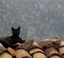 Delphi Cat by Geoff White