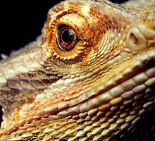 Up Close by Skymall007