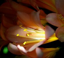 Flower in the light by Ashley Ng